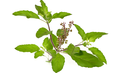 Natural herbs and plants with medicinal value in Ayurveda